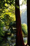sol de la reflexión del agua del lago del otoño Imagen de archivo