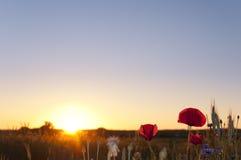 Sol de la tarde Foto de archivo libre de regalías