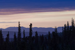 Sol de medianoche Imagen de archivo