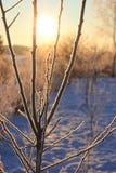 Sol de oro Imagen de archivo libre de regalías