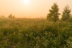 Sol de oro sobre campo del campo en la mañana Imagen de archivo libre de regalías