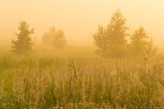 Sol de oro sobre campo del campo en la mañana Fotografía de archivo libre de regalías