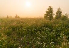 Sol de oro sobre campo del campo en la mañana Foto de archivo libre de regalías