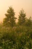 Sol de oro sobre campo del campo en la mañana Fotos de archivo libres de regalías