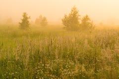 Sol de oro sobre campo del campo en la mañana Fotos de archivo