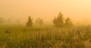 Sol de oro sobre campo del campo en la mañana Imágenes de archivo libres de regalías