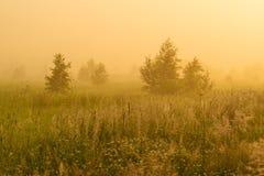 Sol de oro sobre campo del campo en la mañana Imagen de archivo