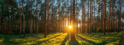 Sol de Sun de la salida del sol de la puesta del sol en Sunny Summer Coniferous Forest S imagen de archivo