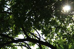 Sol debajo de las hojas imagenes de archivo