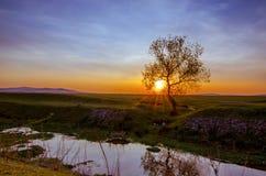 Sol del abarcamiento del árbol en la puesta del sol Imagenes de archivo