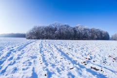 Sol del campo de nieve de los árboles del invierno Fotografía de archivo libre de regalías