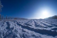 Sol del campo de nieve de los árboles del invierno Foto de archivo