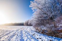 Sol del campo de nieve de los árboles del invierno Imagen de archivo libre de regalías