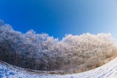 Sol del campo de nieve de los árboles del invierno Fotos de archivo