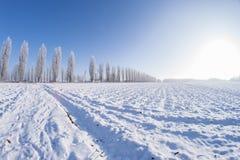 Sol del campo de nieve de los árboles del invierno Foto de archivo libre de regalías