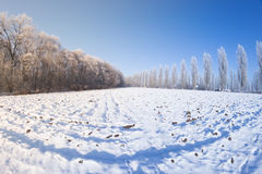 Sol del campo de nieve de los árboles del invierno Imagen de archivo
