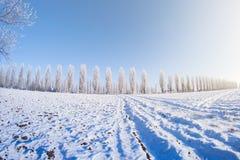 Sol del campo de nieve de los árboles del invierno Fotografía de archivo