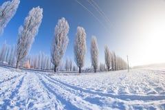 Sol del campo de nieve de los árboles del invierno Fotos de archivo libres de regalías