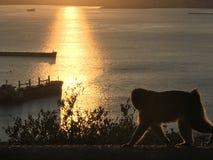 Sol del mono fotografía de archivo libre de regalías