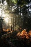 Sol del otoño en arbolado Imagen de archivo