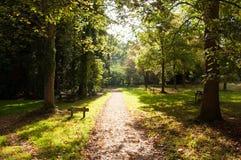 Sol del otoño en el camino Imagen de archivo libre de regalías