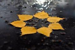 Sol del otoño en el charco Fotos de archivo libres de regalías