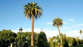 Sol del verano de la palma del parque almacen de video