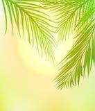 Sol del verano que brilla a través de Palm Beach Imagenes de archivo