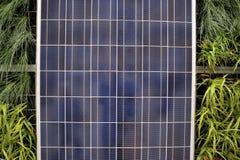 sol- detalj ps för 57392 cell Arkivbilder