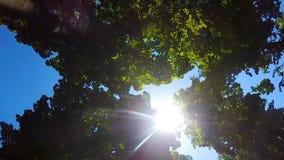 Sol distante que brilha brilhantemente entre os ramos das árvores, aquecendo-se por seu calor video estoque