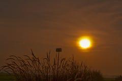 Sol do amanhecer foto de stock royalty free