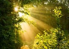 Sol do amanhecer na floresta Fotografia de Stock
