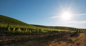 Sol do amanhecer que brilha em vinhedos de Paso Robles no Central Valley de Califórnia EUA Imagem de Stock Royalty Free