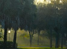 Sol do amanhecer que flui com a área arborizada nevoenta com o assoalho gramíneo em Florida sul, Estados Unidos A vegetação inclu fotografia de stock