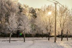 Sol do inverno Fotografia de Stock