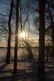 Sol do inverno do por do sol em um fundo de árvores cobertos de neve Fotos de Stock