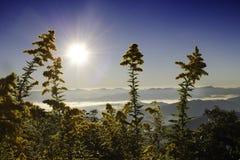 Sol do nascer do sol visto através das flores amarelas Imagens de Stock