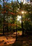 Sol do outono Imagens de Stock Royalty Free