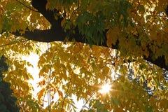 Sol do outono que brilha com as cores em mudança Fotografia de Stock Royalty Free