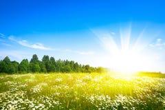 Sol do por do sol e campo da grama fresca verde Imagem de Stock Royalty Free