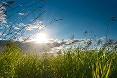 Sol do verão Fotografia de Stock Royalty Free