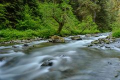 Sol Duc Creek. A spring rocky creek rapidly running down at mountain side in a dense rain-forest. Sol Duc Creek, Olympic National Park, Washington, USA Royalty Free Stock Photos