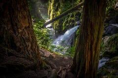Sol Duc Falls i olympisk nationalpark Royaltyfria Foton