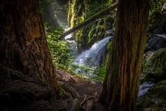 Sol Duc Falls in Olympic National Park. View of Sol Duc Falls waterfall between two trees in the middle of a lush temperate rainforest the Sol Duc Valley in Royalty Free Stock Photos