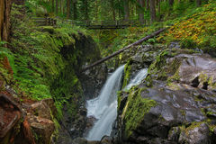 Sol Duc Falls in Olympic National Park, Washington Stock Image