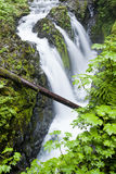 Sol Duc Falls in the Olympic Peninsula. The lush area of the Sol Duc Falls in northwest Washington Stock Photography