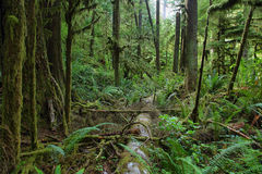 Free Sol Duc Falls Trail Forest Stock Photography - 85566512