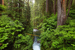 Sol Duc falls trail, Olympic national park, WA, US Stock Image