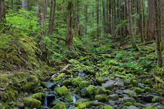 Sol Duc falls trail, Olympic national park, WA, US. River with mossy stones along Sol Duc falls trail, Olympic national park, WA, US Stock Photography