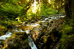 Sol duc Waterfall Royalty Free Stock Images